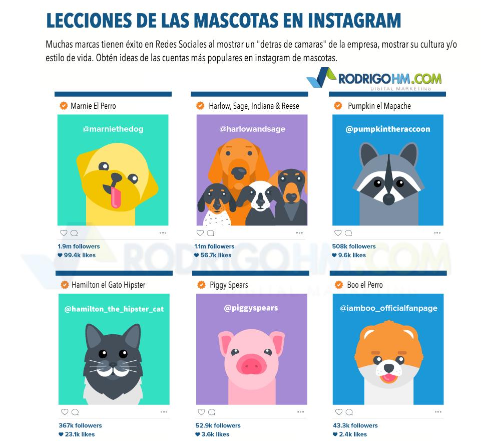 Mascotas en Instagram